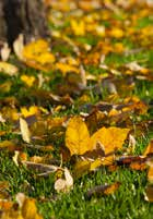 Leaves on Artificial Grass EasyTurf Artificial Turf