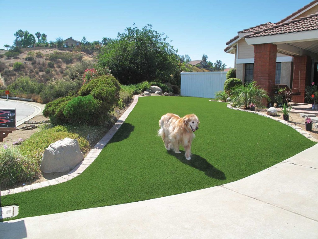 Dog Playing on EasyTurf Artificial Turf