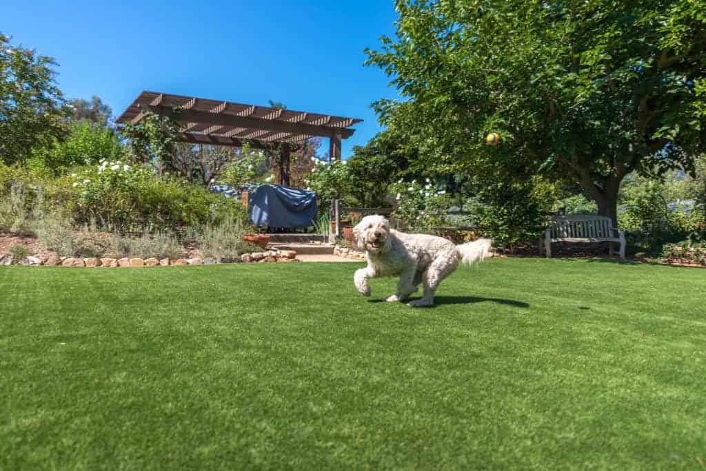 Learn What Makes Artificial Grass And Dog Areas A Perfect Fit!